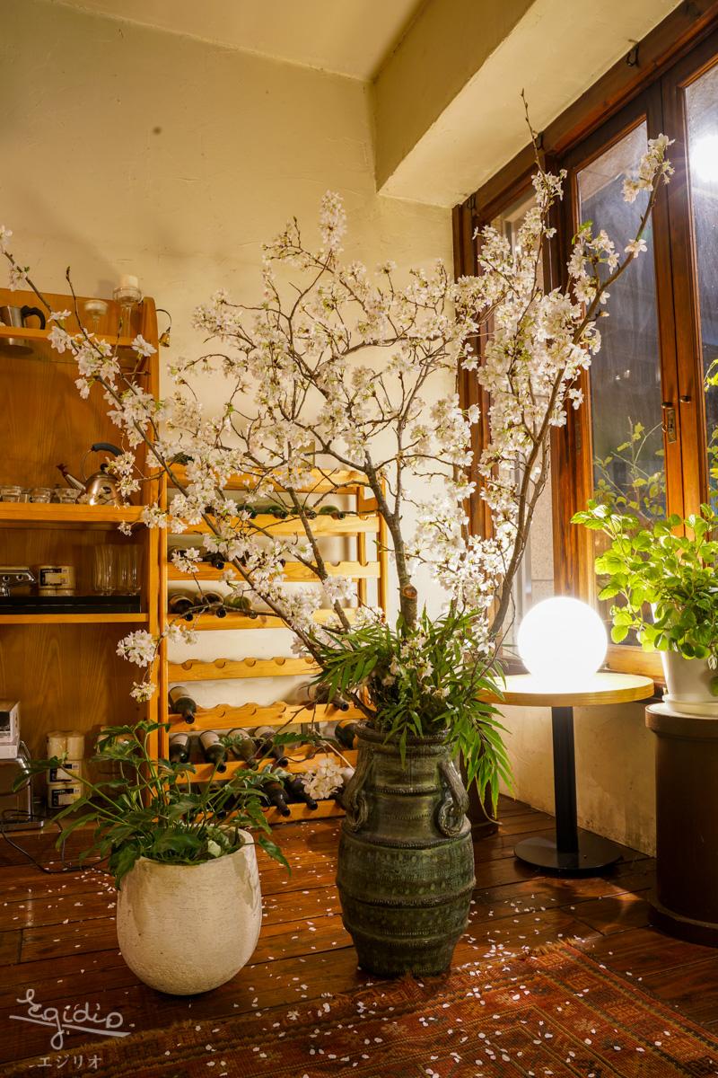エジリオ桜